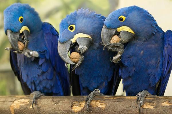 Papegaaien dierentuin Praag
