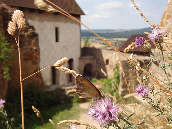 Ruine Tocnik Zebrak